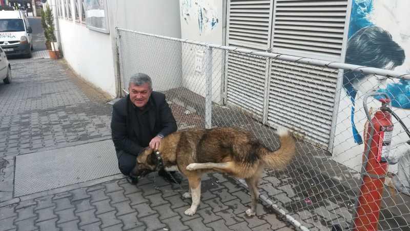 Sakat Köpeğe Hayvanseverler Sahip Çıktı