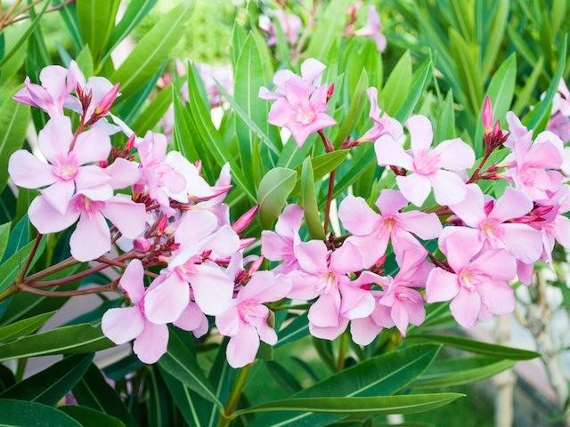 dünyaca en zehirli bitkilerin listesi