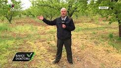 Meyve Ağaçlarında Dengesiz Beslemenin Zararları