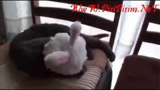 bebek bakıcısı kedi izle