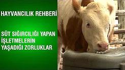 Süt Sığırcılığı Yapan İşletmelerin Yaşadığı Zorluklar