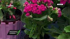 İç Mekan Süs Bitkilerinin Bakımı