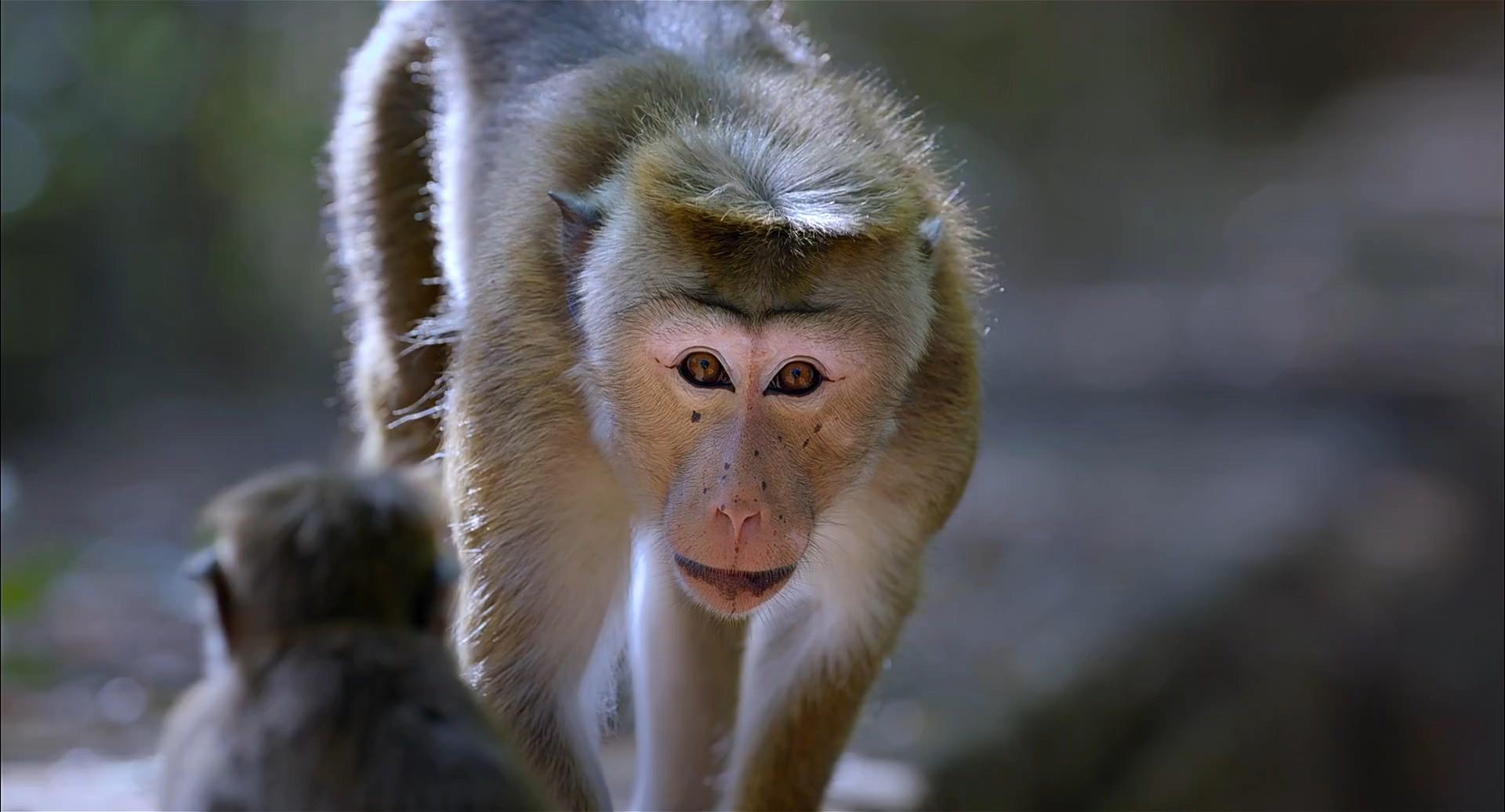 Maymun Krallığı 2015
