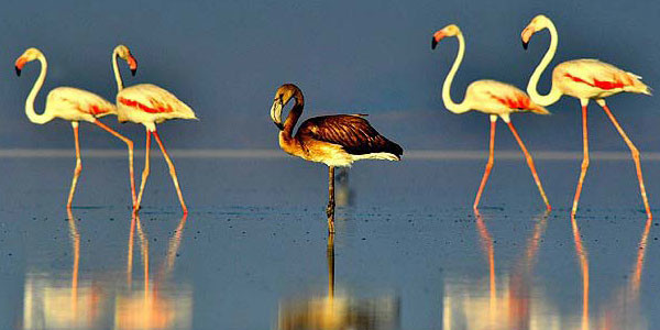 Flamingolar Gelmiyor!
