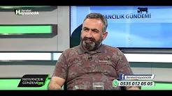 Türkiye'de Birinci Sınıf Büyükbaş Hayvan Var Mı?