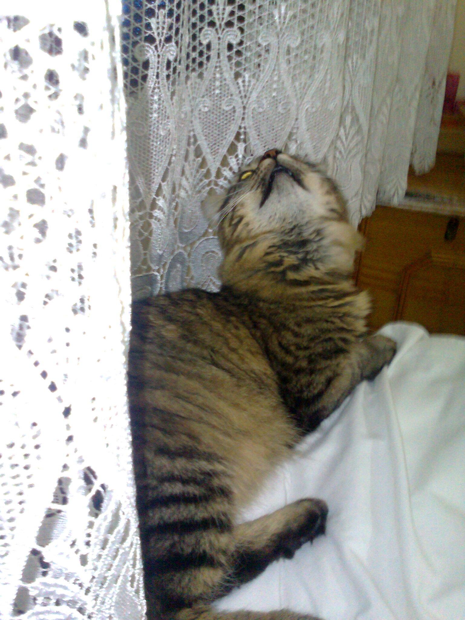 6RJRZ0 - Kedimi hayvansever birine vermek istiyorum