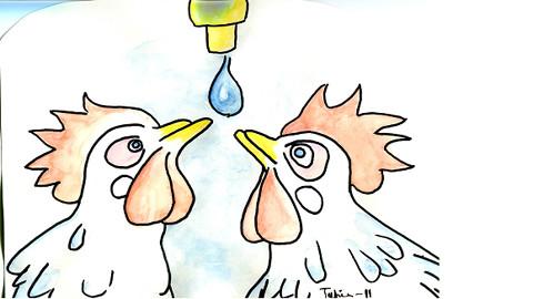 tavuk-nekadar-su-tüketir
