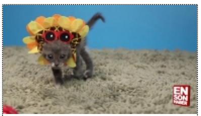 Sevimli yavru kedilerin şapkalar ile imtihanı
