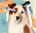 Köpek Göz Testi Oyunu