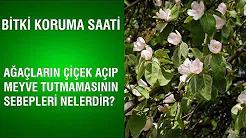 Ağaçların Çiçek Açıp Meyve Tutmamasının Sebepleri Nelerdir?