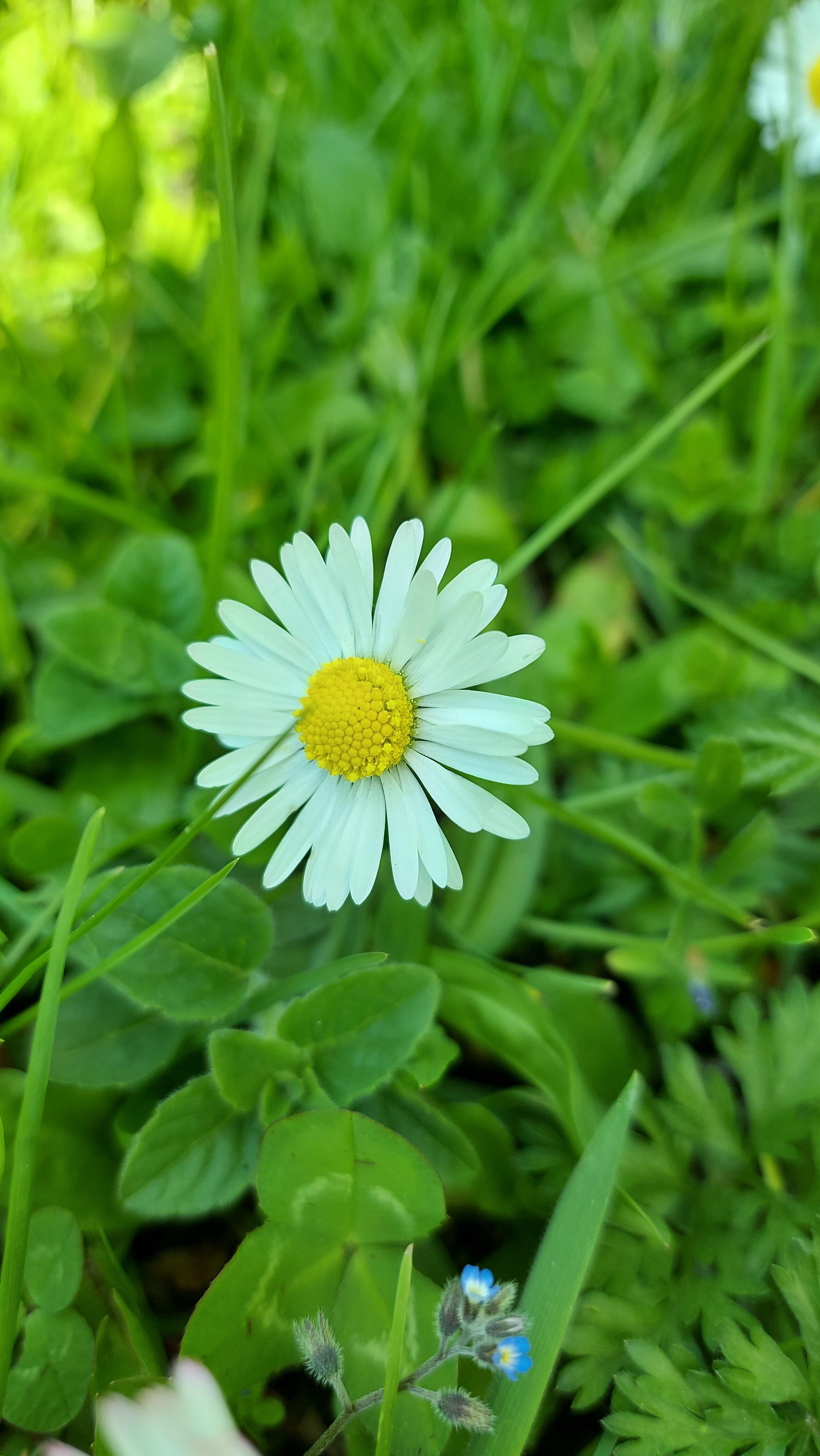 92ChcK - Bugünkü çiçekler kime gitsin ??