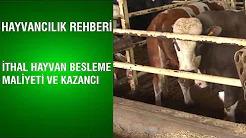 İthal Hayvan Besleme Maliyeti ve Kazancı