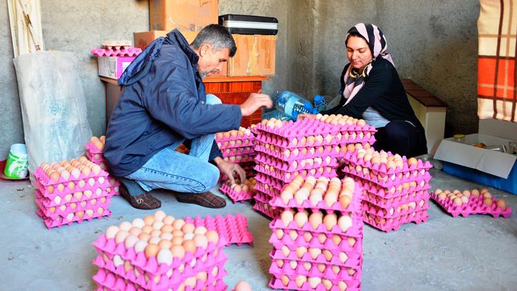 Kadın girişimci devlet desteğiyle organik yumurta üretiyor