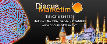 Discusmarketim2