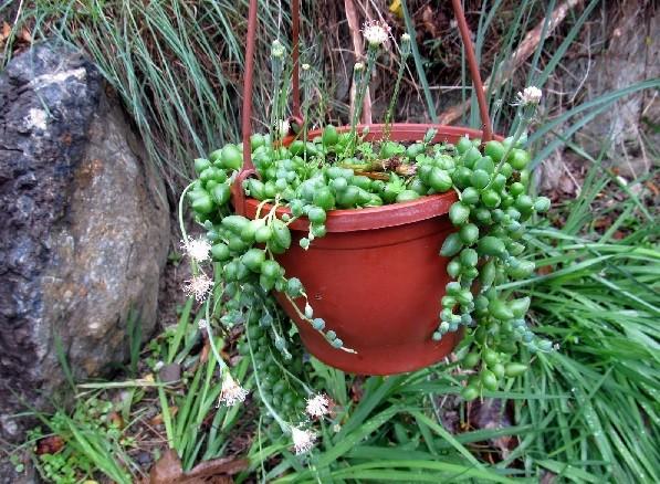 Az1PLv Dünyaca Ünlü En Zehirli 5 Tane Bitki Hangisi?
