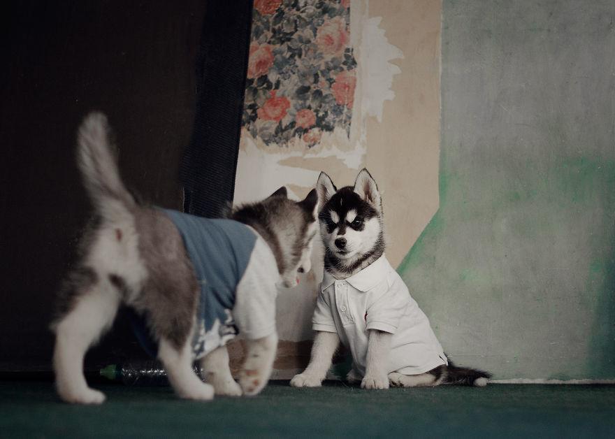 Husky (4)