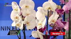 Orkide Bitkisinin Bakımı