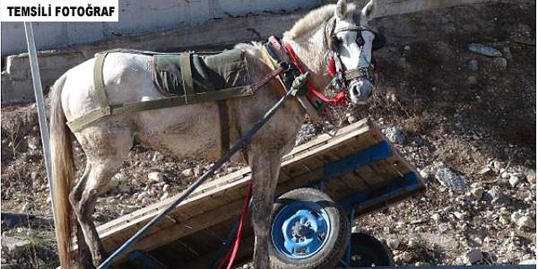 Atı durdurmaya çalışırken yaralandı