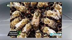 Kışlatma Hazırlıkları ve Kışlatma Sürecindeki Arı Kayıpları