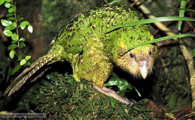 LoVDR1 - İlginç Hayvan İsimleri