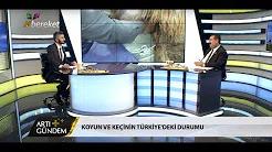 Koyun ve Keçinin Türkiye'deki Durumu