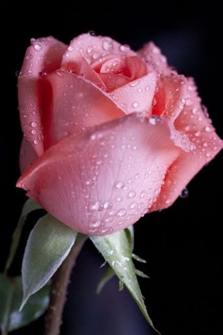 NWmwuy - 🌹🌹Bugünkü çiçekler kime gitsin 🌹🌹