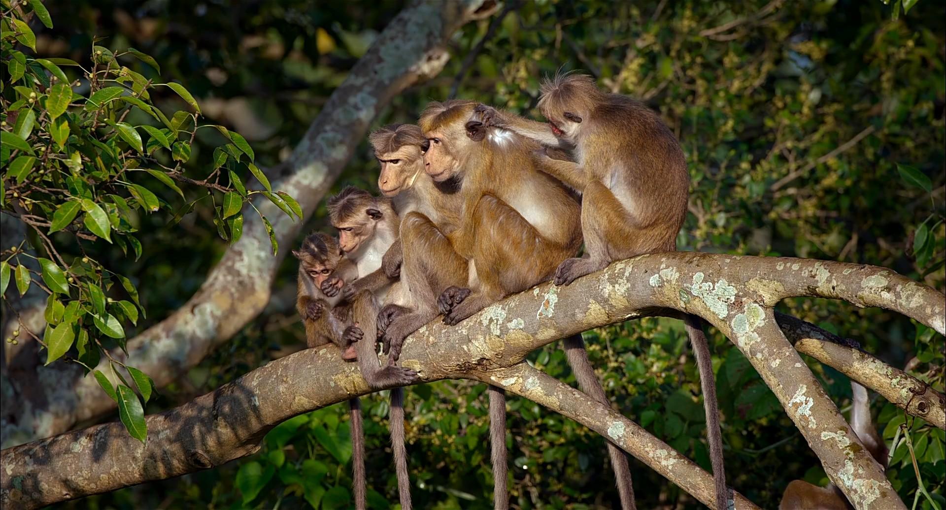 Maymun Krallığı 2015 türkçe indir