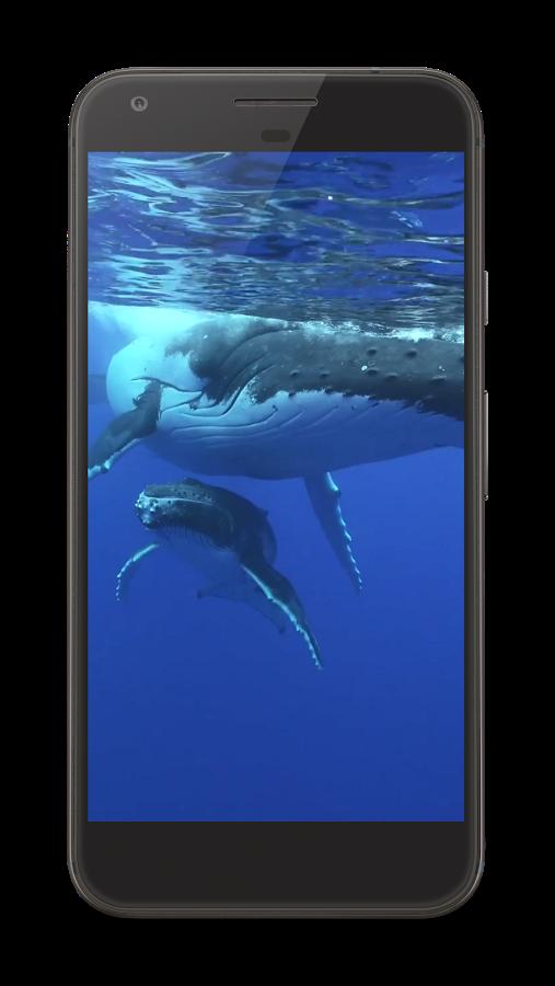 Mavi Balina Android APK