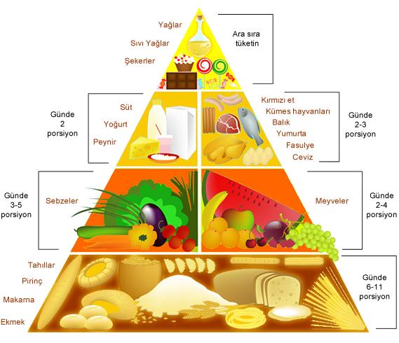 Besin Piramidi, Besin Piramidi Nedir, Besin Piramidinin Özellikleri, Besin Piramidi maketi