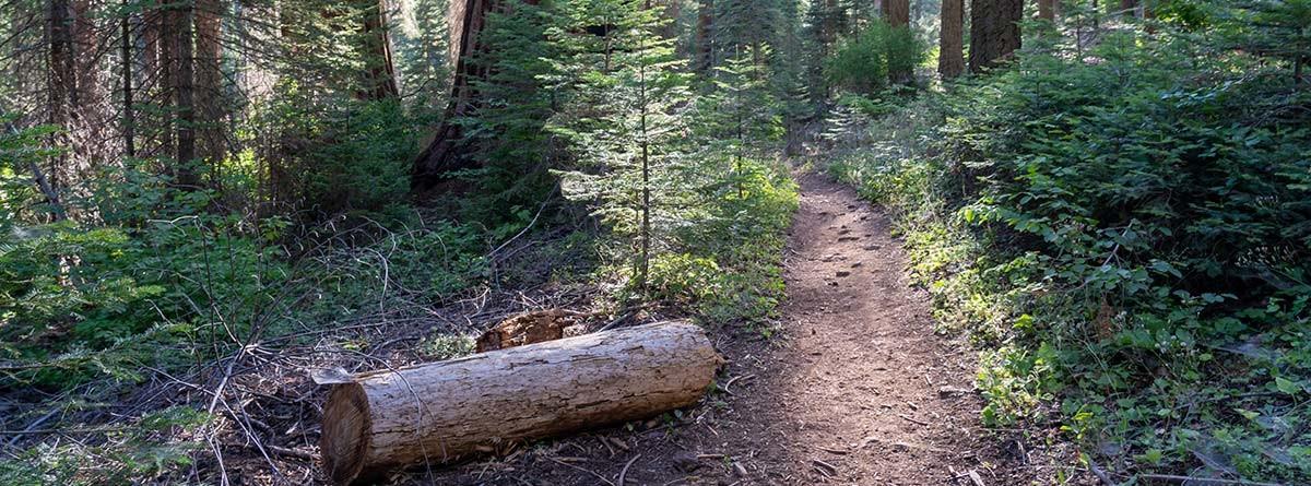 ormanda kuru ağaç kütüğü