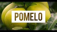 Pomelo (Şadok) Meyvesi