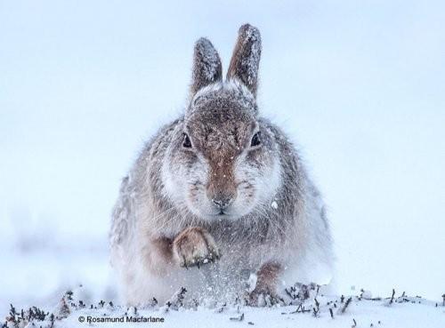 tavşan fotoğrafı
