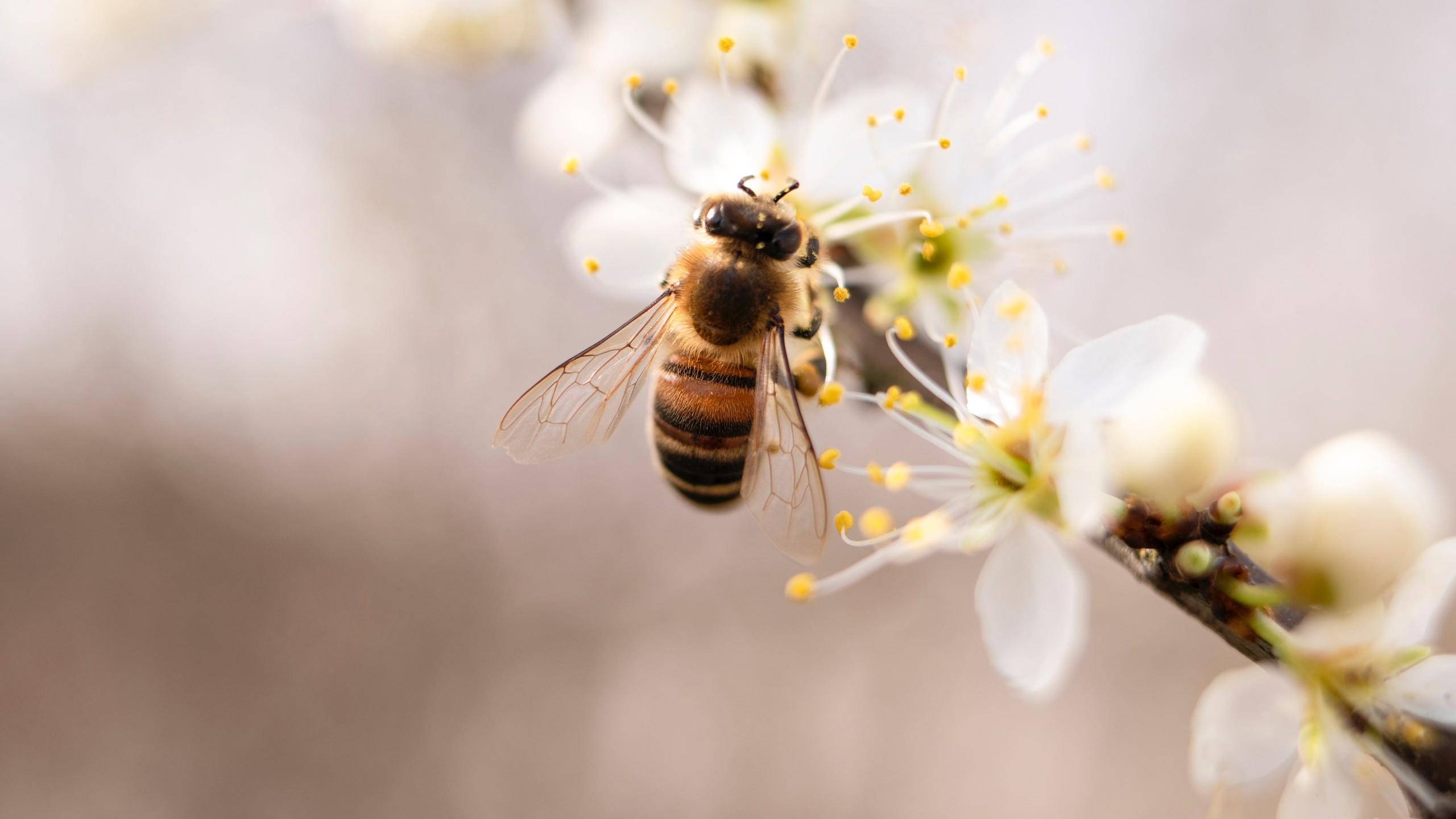 çiçek, arı, bal
