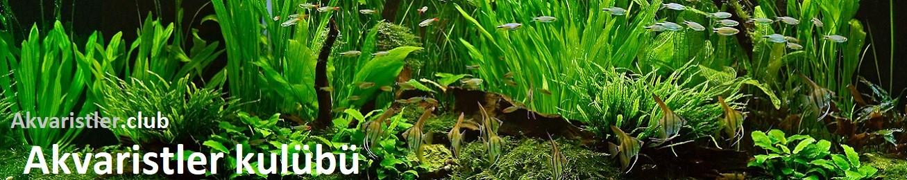 Akvaristler Kulübü