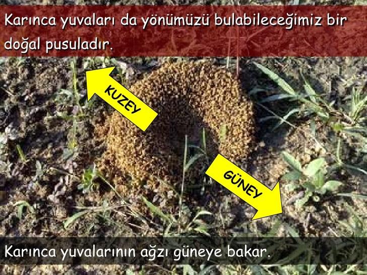 Karınca yuvalarının girişi hangi yönü gösterir