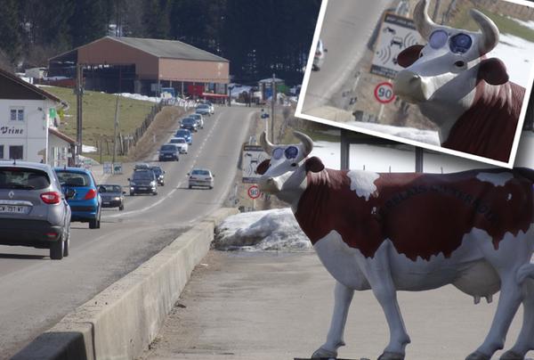 Bulgaristan'da RADAR i�in inek maketi