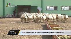 """""""300 Koyun Projesinden 1667 Kişi Yararlanabilecek"""""""