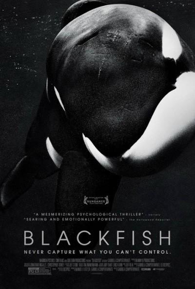 Kara Balık - Blackfish 2013 BRRip XviD Türkçe Dublaj Belgesel İndir