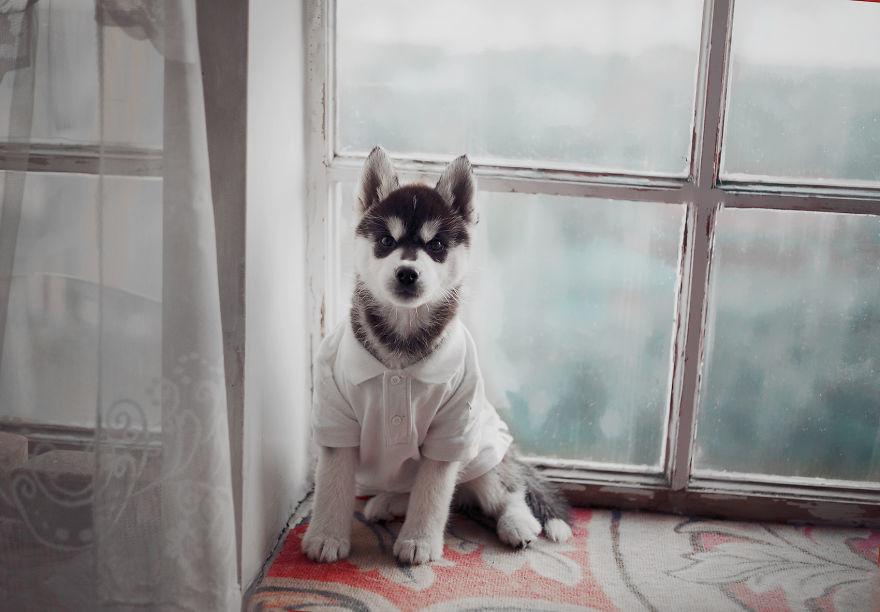 Husky (5)