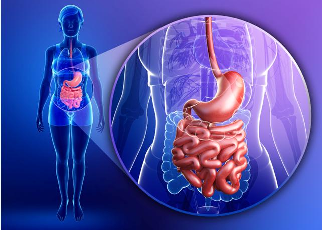 ZZjvgG Prebiyotikler ile Probiyotikler Arasındaki Fark Nedir?