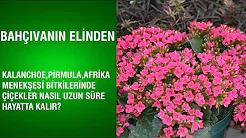 Çiçeklerin Uzun Süre Hayatta Kalması İçin Yapılması Gerekenler