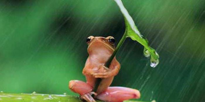 Küçük Kurbağanın Hikayesi - Bu hikaye benim hayatımı değiştirdi BGa26Y