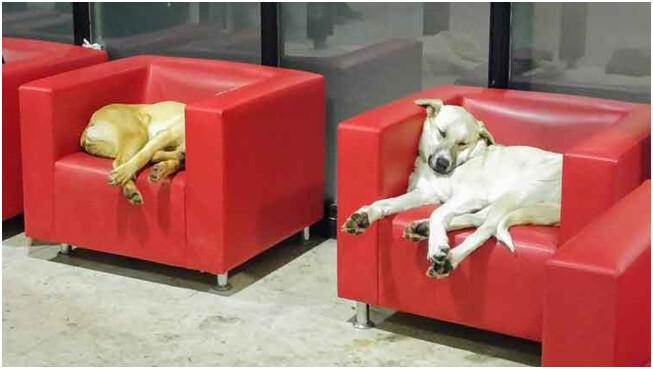 ODTÜ kütüphane kırmızı koltuklar