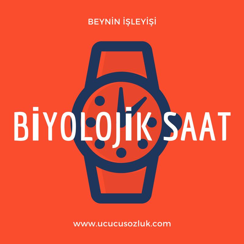 Biolojik Saat