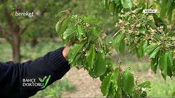 Meyve Ağaçlarında Döllenme Problemleri