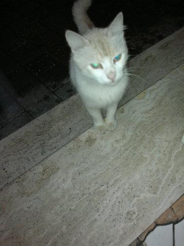 nGZgJa - Kediler ve Kediler