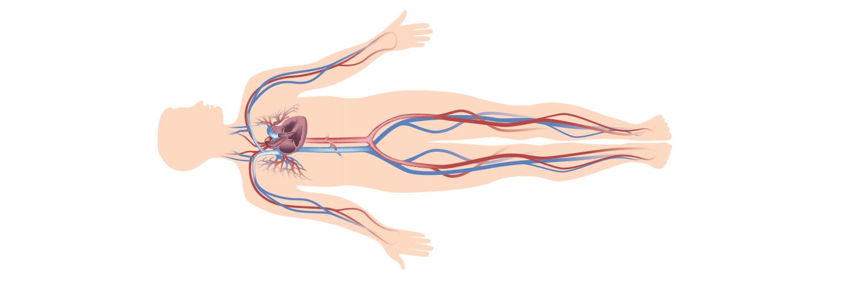 ilk yardımda insan vücudu hakkında bilinmesi gerekenler