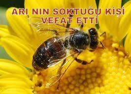 Arı nın soktuğu kişi vefat etti