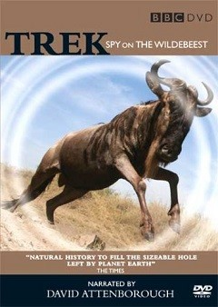 Antiloplar Göç Yolundaki Casus - Trek Spy On The Wildebeest - 2007  Türkçe Dublaj DVDRip indir