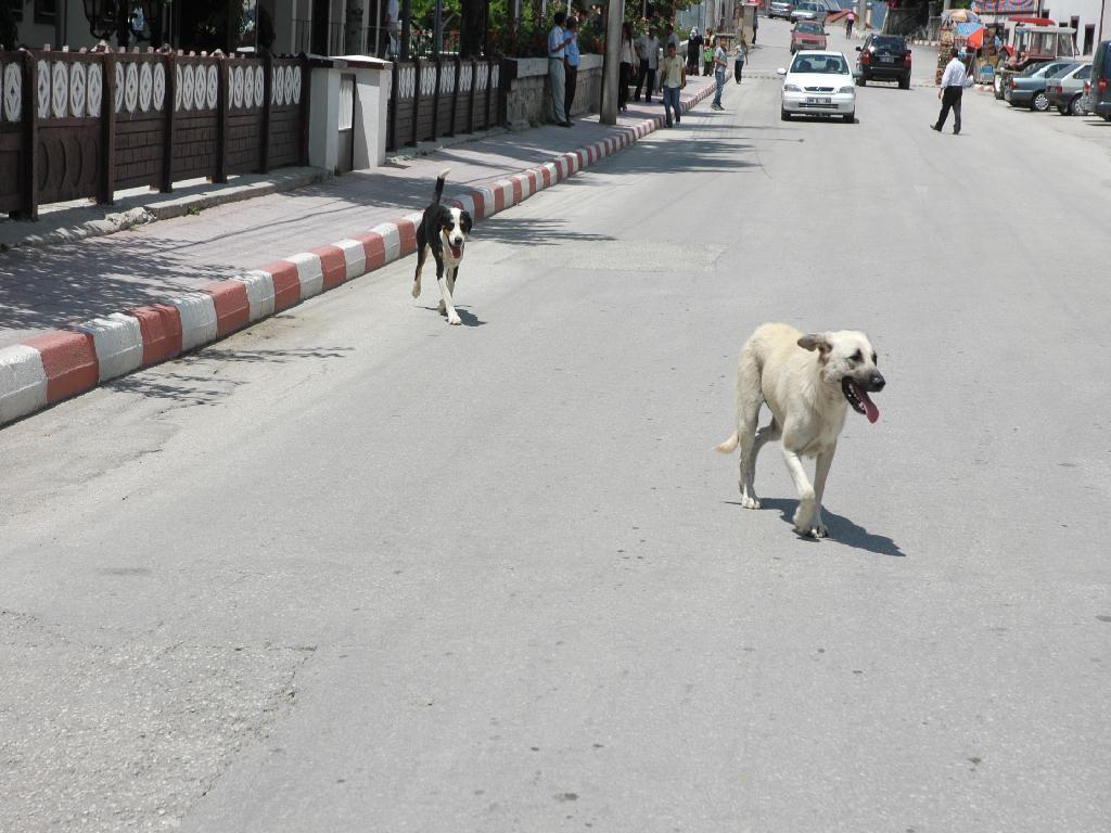 Başıboş Dolaşan Köpekler Toplanıyor